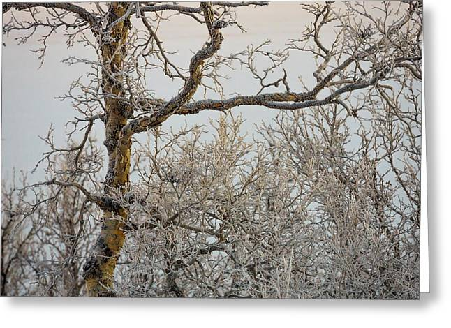 Temperature Greeting Cards - Trees In The Frozen Landscape, Cold Greeting Card by Panoramic Images