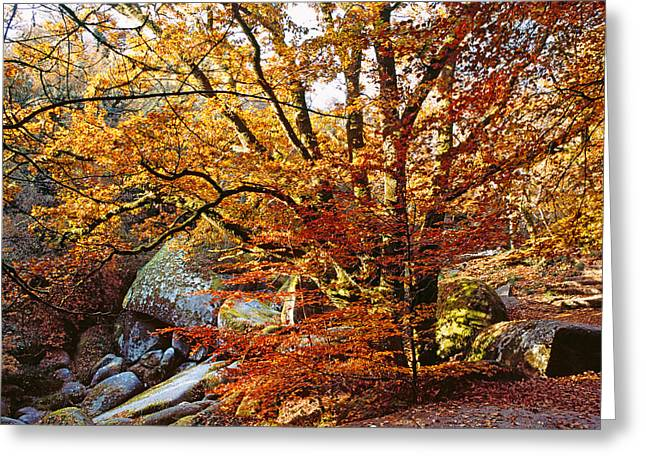 Fallen Leaf Greeting Cards - Trees With Granite Rock At Huelgoat Greeting Card by Panoramic Images