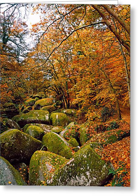 Fallen Leaf Greeting Cards - Trees With Granite Rocks At Huelgoat Greeting Card by Panoramic Images