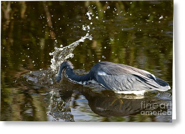 Green Cay Greeting Cards - Tricolored Heron Greeting Card by Mark Newman