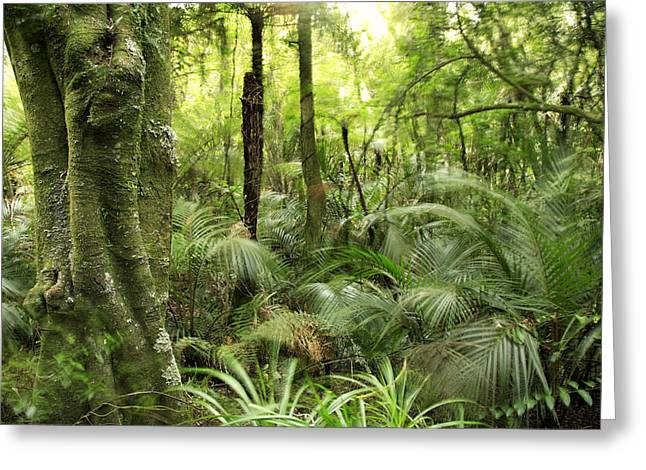 Green Day Greeting Cards - Tropical jungle Greeting Card by Les Cunliffe