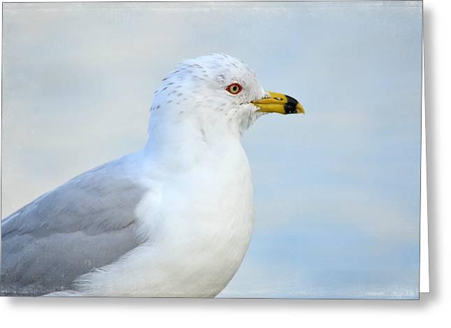 Ring-billed Gull Greeting Cards - True Blue Greeting Card by Fraida Gutovich