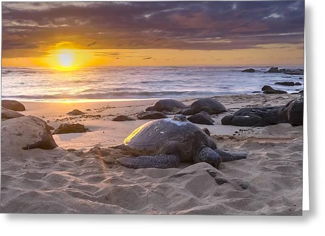 Laniakea Beach Greeting Cards - Turtle Beach sunset Oahu Hawaii Greeting Card by Jianghui Zhang