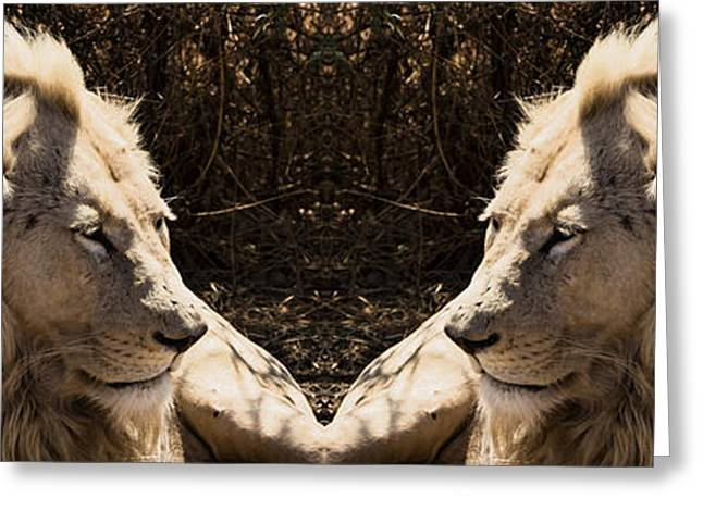 Lions Greeting Cards - Twins Greeting Card by Douglas Barnard