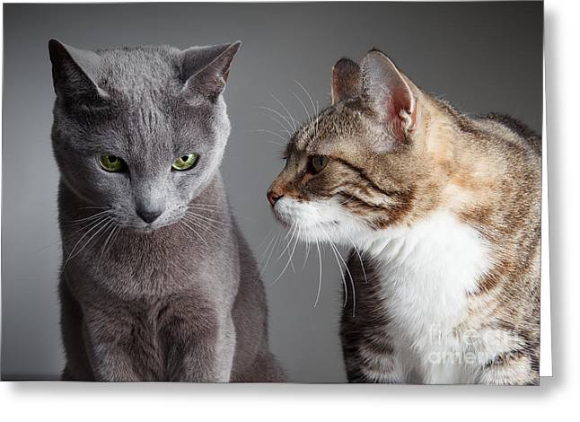 Bred Photographs Greeting Cards - Two Cats Greeting Card by Nailia Schwarz