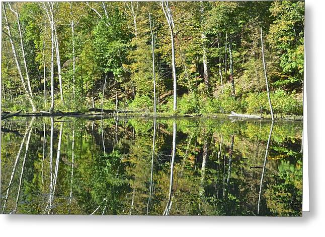 Trees Reflecting In Creek Greeting Cards - Two of a Kind Greeting Card by Frozen in Time Fine Art Photography