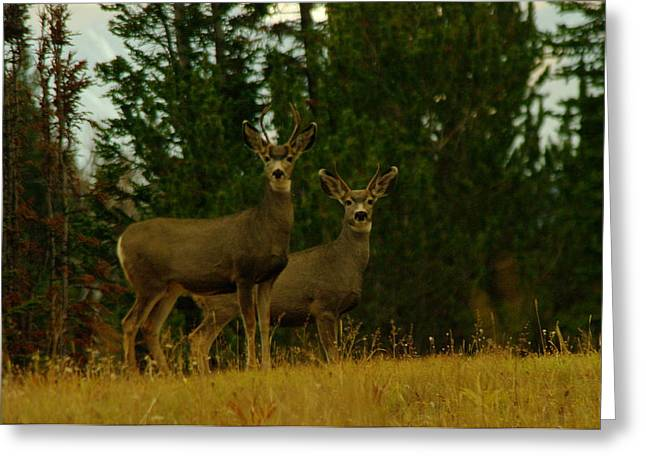 Forest Creature Greeting Cards - Two Young Bucks Greeting Card by Jeff  Swan