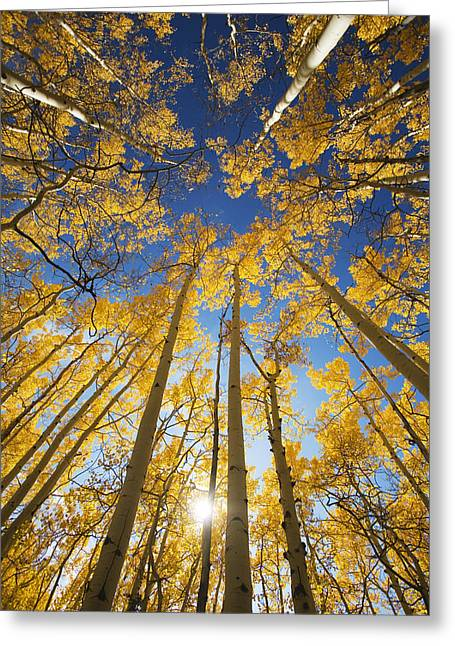 Steamboat Springs Western Greeting Cards - Usa, Colorado, Near Steamboat Springs Greeting Card by Ron Dahlquist