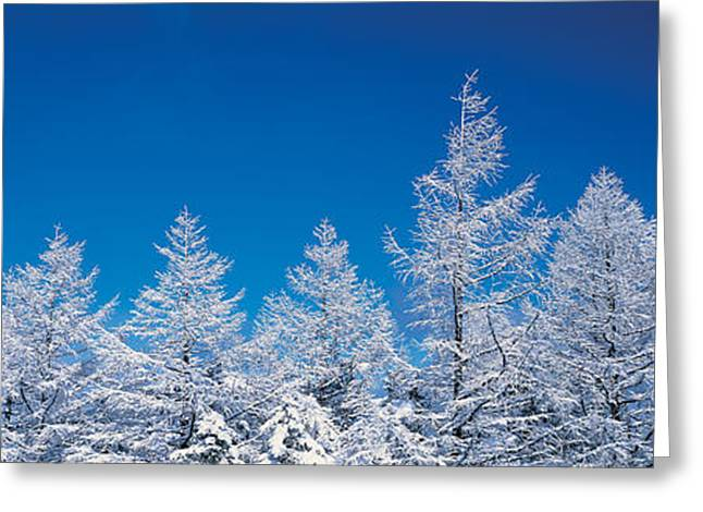 Snowy Day Greeting Cards - Utsukushigahara Nagano Japan Greeting Card by Panoramic Images