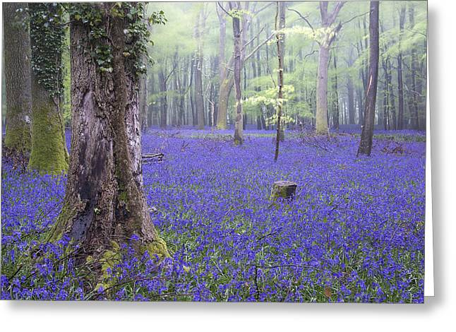 Scripta Greeting Cards - Vibrant bluebell carpet Spring forest foggy landscape Greeting Card by Matthew Gibson