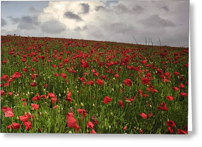 Colorful Cloud Formations Greeting Cards - Vibrant poppy fields under moody dramatic sky Greeting Card by Matthew Gibson