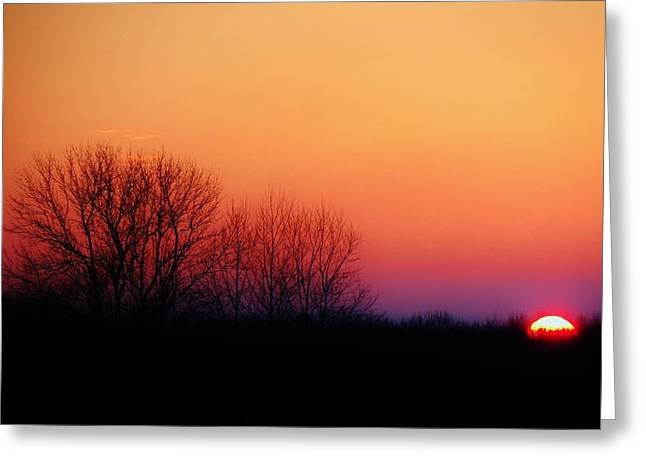 Dark Woods At Sunset. Greeting Cards - Sunset Hues Greeting Card by Victoria Fischer