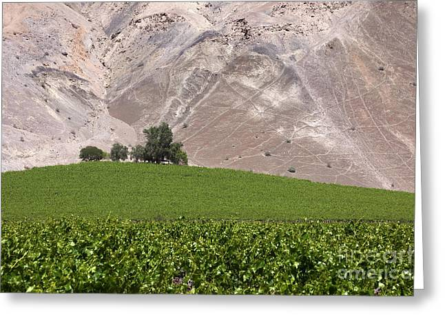 Green Chile Greeting Cards - Vines in the desert Greeting Card by James Brunker