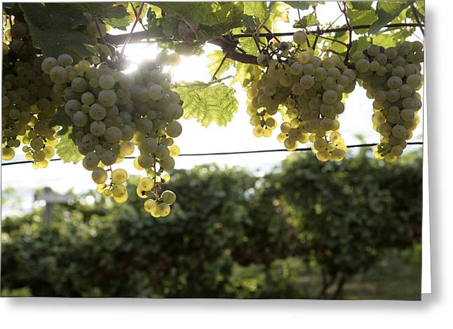 Fruit And Wine Greeting Cards - Vineyard Greeting Card by JP Tripp