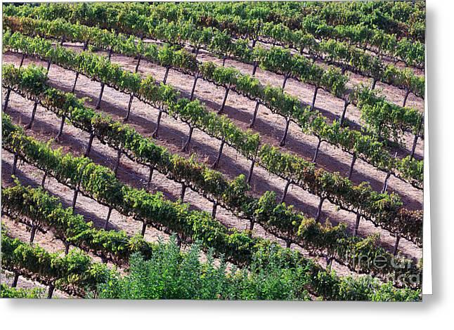 Red Wine Prints Greeting Cards - Vineyard Greeting Card by Mariusz Blach