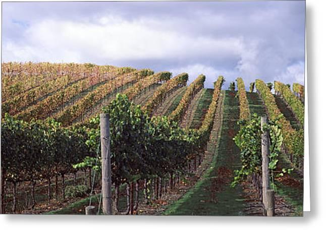 Napa Greeting Cards - Vineyard, Napa Valley, California, Usa Greeting Card by Panoramic Images