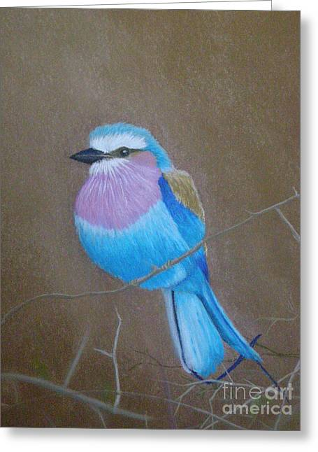 Exotic Pastels Greeting Cards - Violet-breasted Roller Bird Greeting Card by Lynn Quinn