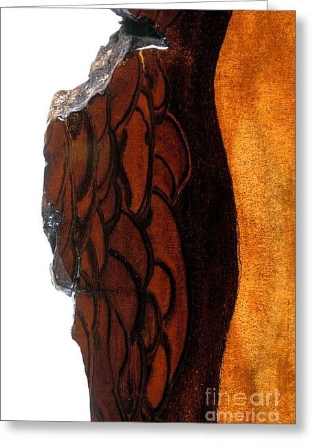 Regia Greeting Cards - Walnut Bark Greeting Card by Dr. Keith Wheeler
