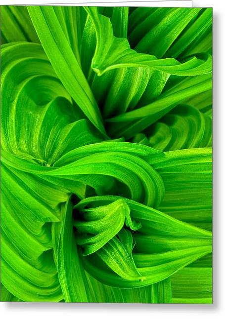 False Hellebore Greeting Cards - Wavy Green Greeting Card by Jeff Sinon