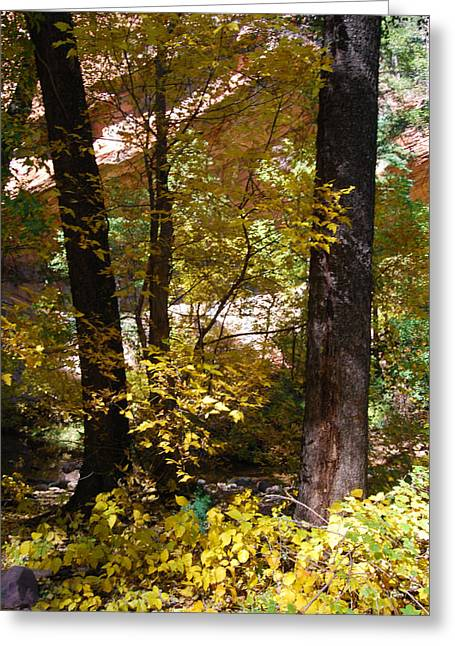 West Fork Greeting Cards - West Fork Fall Color Greeting Card by Tam Ryan
