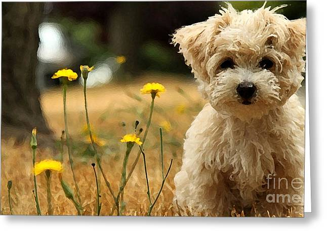 White Terrier Mixed Media Greeting Cards - West Highland White Terrier Painting Greeting Card by Marvin Blaine