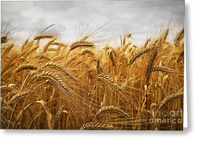 Straw Greeting Cards - Wheat Greeting Card by Elena Elisseeva