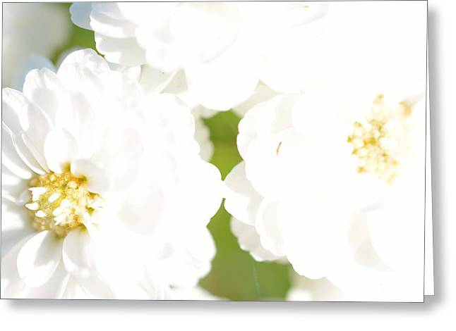 Close Up Floral Mixed Media Greeting Cards - White flower macro Greeting Card by Toppart Sweden