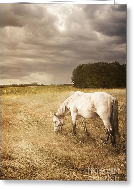 Ground Greeting Cards - White Horse Greeting Card by Jelena Jovanovic