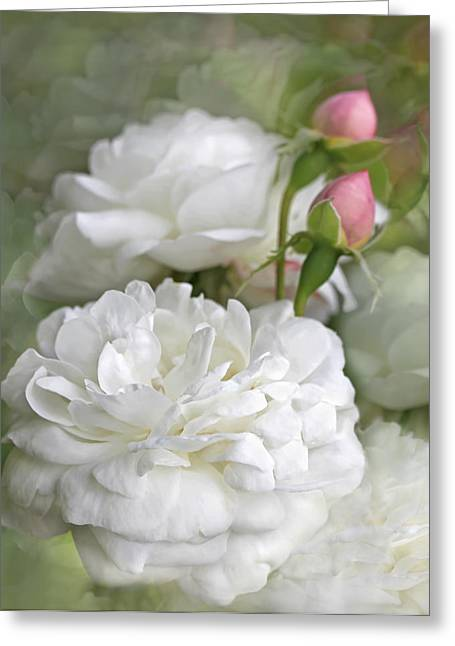 Green Pastel Greeting Cards - White Roses Bouquet Greeting Card by Jennie Marie Schell