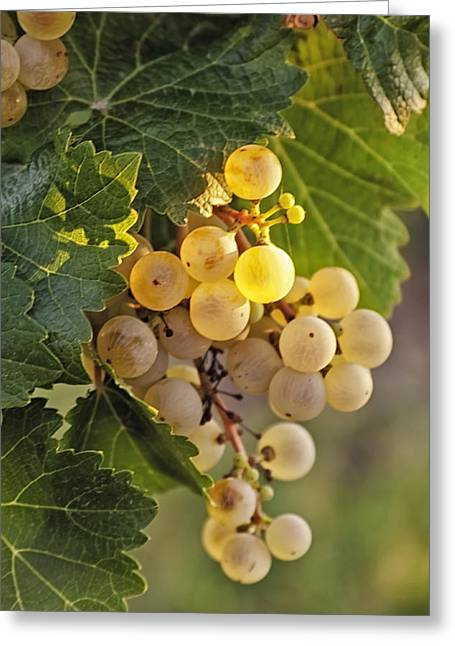 White Grape Greeting Cards - White Wine Grapes Greeting Card by Teri Virbickis