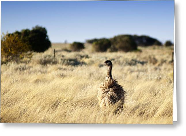 Wild Emu Greeting Card by Tim Hester