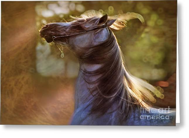 Crazy Horse Photographs Greeting Cards - Wild Heart Greeting Card by Angel  Tarantella
