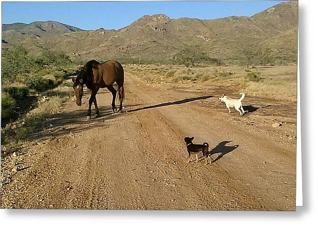 Animals Love Greeting Cards - Three Friends On The Range Greeting Card by James Welch