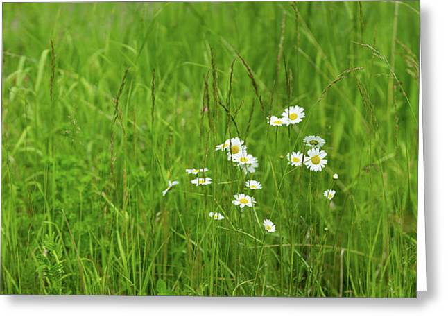 Wildflowers In A Field, Gooseberry Greeting Card by Panoramic Images
