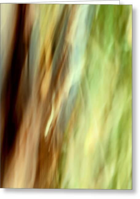 Offshoot Greeting Cards - Windswept Greeting Card by Mah FineArt