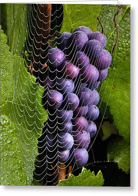 Wine In A Web Greeting Card by Jean Noren