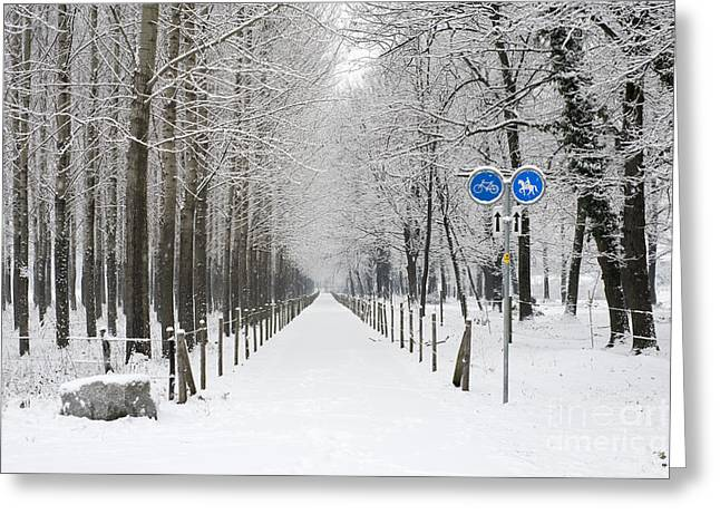 Winter Scenes Rural Scenes Greeting Cards - Winter alley with trees Greeting Card by Mats Silvan