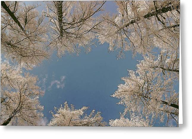 Winter Photos Greeting Cards - Winter Canopy Greeting Card by Mountain Dreams