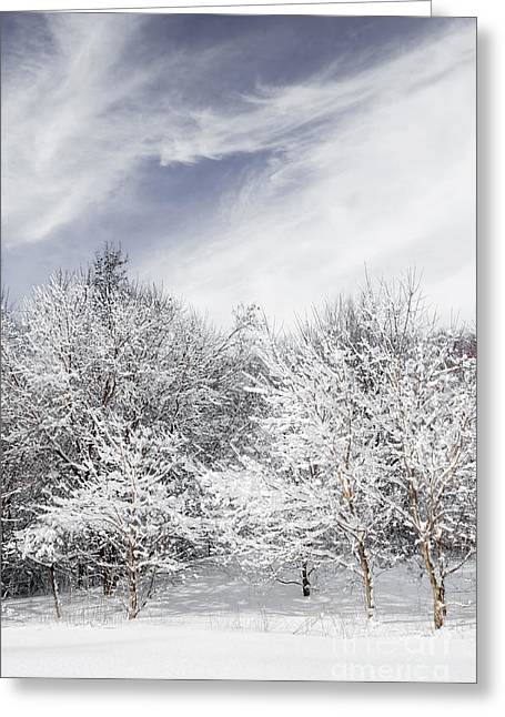 Winter Park Greeting Cards - Winter forest Greeting Card by Elena Elisseeva