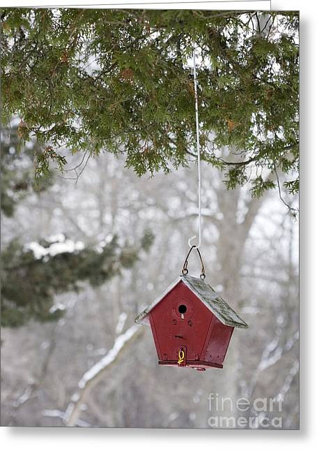 Peaceful Scene Greeting Cards - Winter Shelter Greeting Card by Patty Colabuono