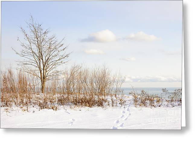 Park Scene Greeting Cards - Winter shore of lake Ontario Greeting Card by Elena Elisseeva