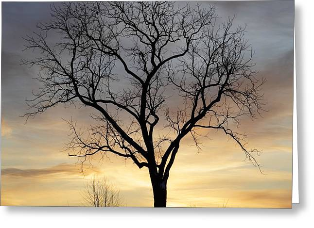 Gnarly Greeting Cards - Winter Sunset Tree Greeting Card by John Stephens