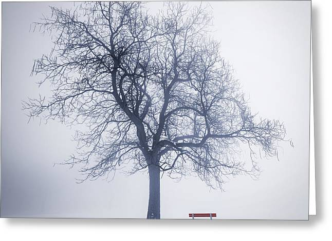 Snow Scene Landscape Greeting Cards - Winter tree in fog Greeting Card by Elena Elisseeva