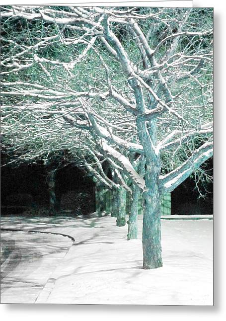 Guy Ricketts Greeting Cards - Winter Trees Greeting Card by Guy Ricketts