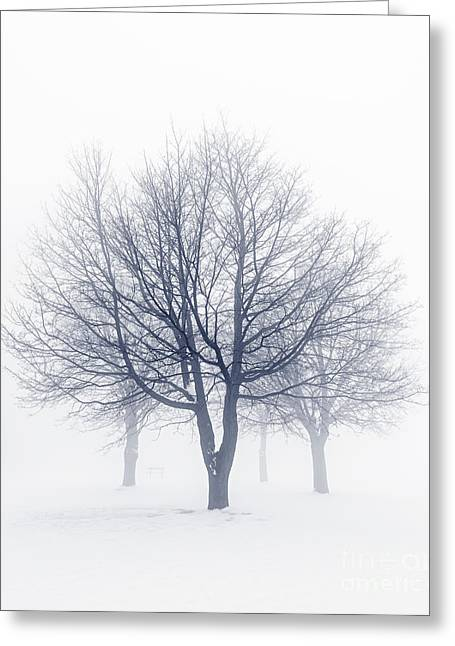 Snow Scene Landscape Greeting Cards - Winter trees in fog Greeting Card by Elena Elisseeva