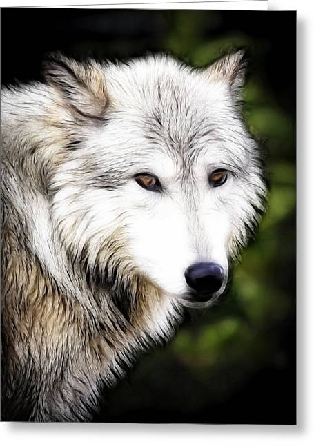 Preditor Greeting Cards - Wolf Art Greeting Card by Steve McKinzie