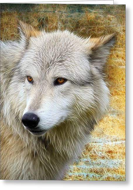Preditor Greeting Cards - Wolf Greeting Card by Steve McKinzie