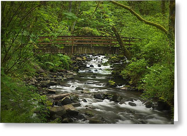 Columbia River Greeting Cards - Wooded Stream in the Spring Greeting Card by Andrew Soundarajan