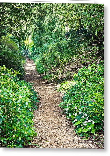 Rambling Greeting Cards - Woodland path Greeting Card by Tom Gowanlock