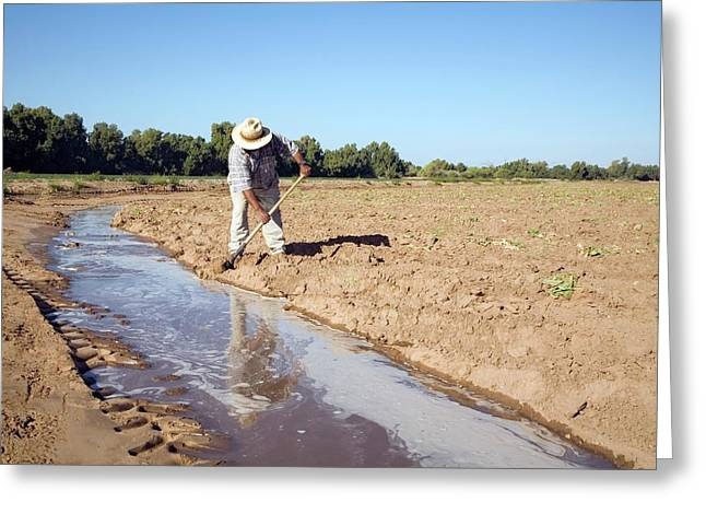 Worker Digging Irrigation Channels Greeting Card by Jim West